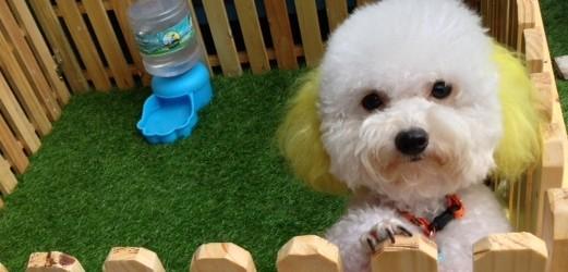 คนเลี้ยงสุนัขส่วนใหญ่เคยใช้บริการรับฝากสุนัข